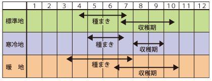 枝豆種まきカレンダー