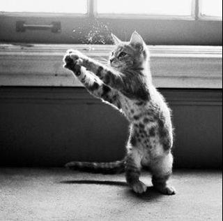 蚊を叩く猫