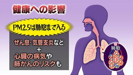 PM2.5は肺の奥深くに