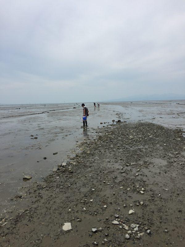 荒尾漁協の干潟2